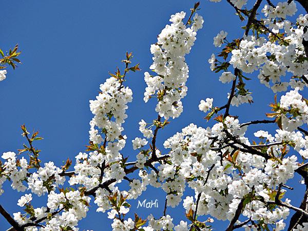 Frühling 2011 © Martina Hildebrand